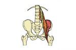 The Psoas Workshop - Anatomy for Teachers